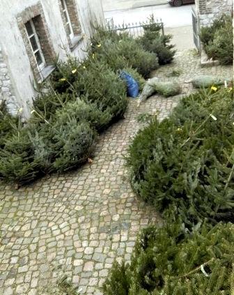 Weihmachtsbaumaktion der Eilendorfer Pfadfinder